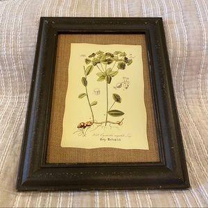 """Raz"" Wall Picture Art-Euphorbia angulata Jaco"